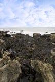 уловил seaweed много утесов Стоковые Изображения RF