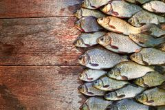 Уловленные рыбы карпа на древесине Заразительная пресноводная рыба на деревянной предпосылке Много рыбы леща, crucian или плотва  Стоковое фото RF