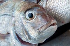 уловленный луциан рыб свеже стоковое фото
