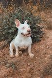 Улыбка собаки стоковые изображения rf
