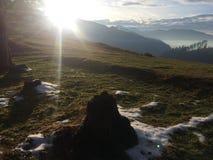 Улыбка Солнца в лесе стоковые фотографии rf