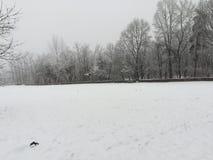 Ульи на зиме стоковая фотография rf