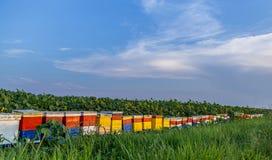Ульи на поле 3 солнцецветов Стоковые Изображения RF