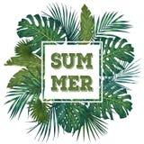 Ультрамодный тропический дизайн листьев Ботаническая иллюстрация вектора вектор темы лета неба иллюстрации бабочек зеленый Стоковое фото RF
