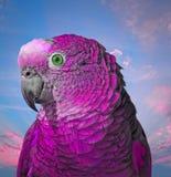 Ультрафиолетов милый попугай мальчика стоковые изображения rf