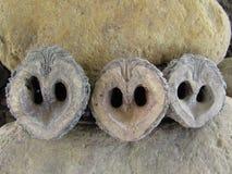 Уменьшанные вдвое корпусы черного грецкого ореха против предпосылки утеса стоковое изображение