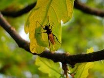 Уменьшите муху сидя на части дуба Стоковые Изображения