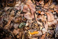 умершие выходят идеал съемки для предпосылок и текстур Стоковая Фотография RF