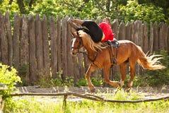 Умелый всадник лошади Стоковая Фотография RF