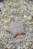 Умирают морские звёзды на утесе Стоковое Изображение