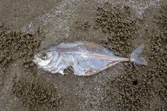 Умирают рыбы на пляже Стоковое Фото