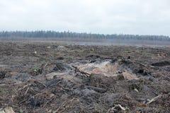 Умирая лес Стоковое Фото