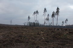 Умирая лес Стоковые Фото