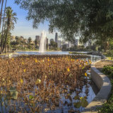 Умирая заводы лотоса на озере парк отголоска Стоковые Фото
