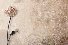 Умирая пинк Роза Стоковая Фотография RF