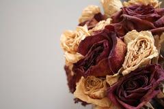 Умирая розы стоковые фотографии rf