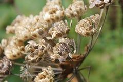 умирая цветок Стоковые Изображения RF