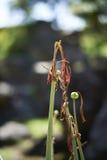 умирая цветок Стоковые Фотографии RF