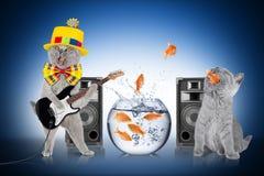 Умная концепция команды кота Стоковое Изображение