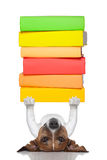 Умная собака Стоковые Фото