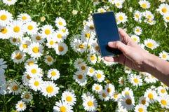 Умная фотография телефона стоковые фотографии rf