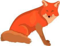 Умные милые идти шагать красной лисы и наблюдать стоковые фотографии rf
