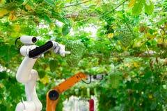 Умные робототехнические фермеры жмут в автоматизации робота земледелия футуристической для работы технологии стоковые фотографии rf