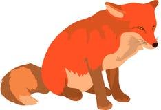 Умный милый красной лисы шагать и смотреть идти вперед стоковое фото
