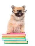 Умный щенок шпица при стекла стоя на книги на белизне Стоковое Изображение