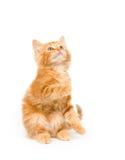 умолять обслуживанию котенка стоковое фото