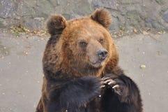 Умолять для еды в зоопарке Стоковые Фото