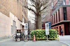 Университет 2018 токио Японии стоковые фотографии rf