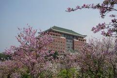 Университет южного Китая аграрный Стоковое фото RF