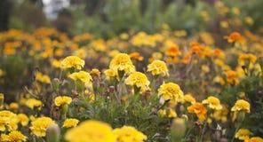 Уникально свежие цветки в естественной растущей окружающей среде, природе восточной Украины, природе восточной Украины Стоковая Фотография RF