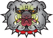 Уникально собака Bull Стоковое Изображение RF