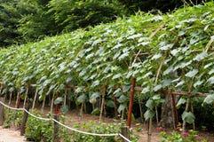 Уникально фото от корейской деревни коец сада Стоковые Изображения RF