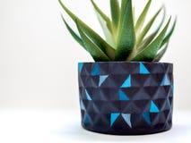 Уникальные черные геометрические плантаторы Покрашенные конкретные плантаторы для домашнего украшения стоковая фотография rf