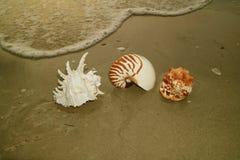 Уникально естественные Seashells на береге моря с swash Стоковые Изображения RF