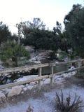 Уникально парк Аликанте Стоковые Фото