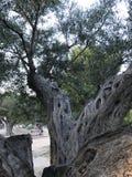 Уникально парк Аликанте Стоковые Фотографии RF