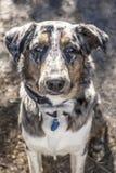 Уникально покрашенная собака стоковая фотография rf