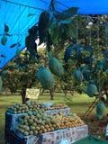 Уникально разнообразие манго Стоковые Фото