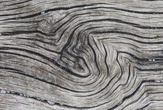 Уникально текстура дерева стоковое фото