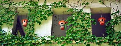 уникально фидеры птицы на террасе Стоковая Фотография