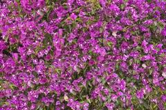 Уникально цветки стены Стоковое Изображение