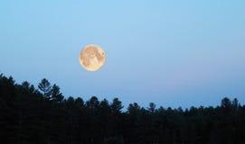 лунный свет Стоковое Изображение