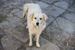 Унылая покинутая собака стоковые изображения rf