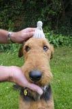 Унылая послушливая собака стоковое фото rf