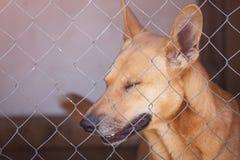 Унылая собака в железной клетке в укрытии Стоковые Фотографии RF