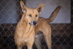 Унылая собака в железной клетке Стоковая Фотография